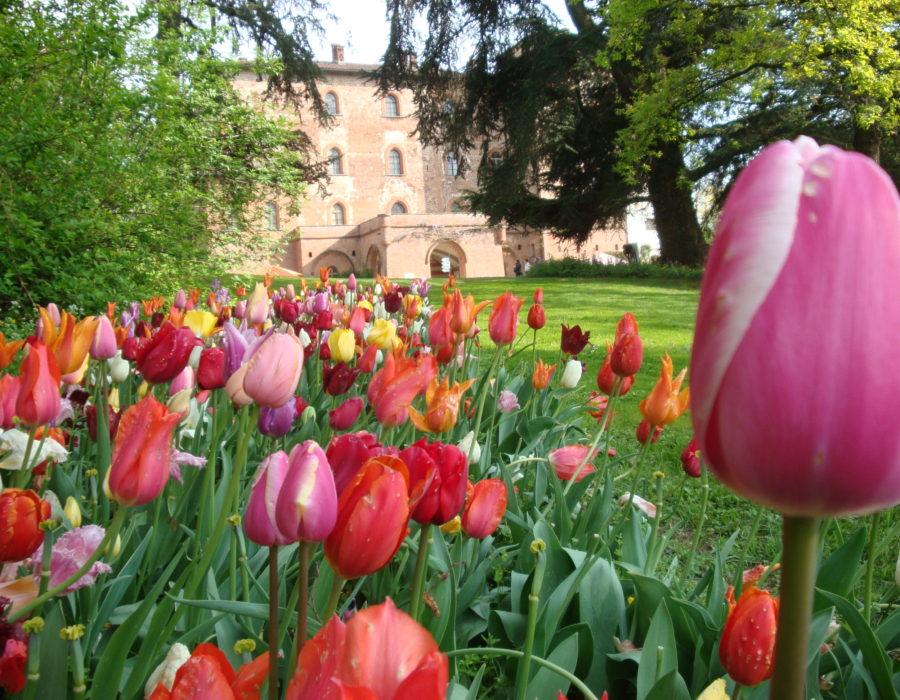 castello-di-pralormo_messer-tulipano-0a