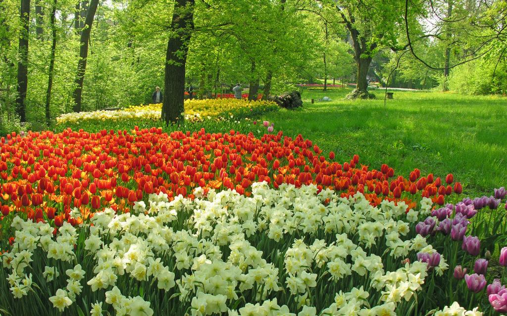 castello-di-pralormo_messer-tulipano-107